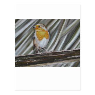 Cartão Postal Pisco de peito vermelho do inverno