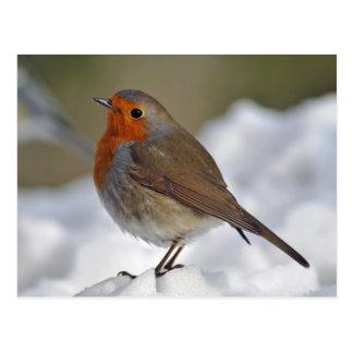Cartão Postal Pisco de peito vermelho europeu na neve