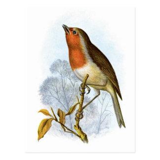 Cartão Postal Pisco de peito vermelho europeu - rubecula do