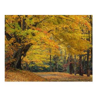 Cartão Postal Pista pendendo sobre do país da árvore de bordo do