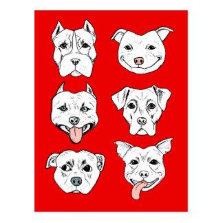 """Cartão Postal """"Pittie Pittie por favor!"""" Caras do cão do pitbull"""