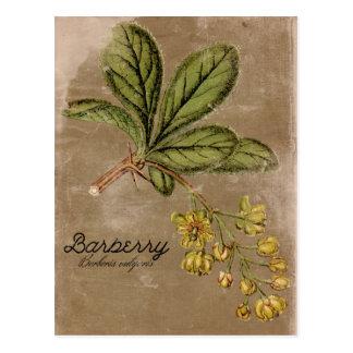 Cartão Postal Planta de Bush da bérberis do estilo do vintage