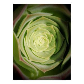 Cartão Postal planta do succulent