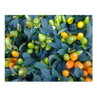 Cartão Postal Planta dos pimentos