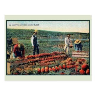 Cartão Postal Plantação 1900 do abacaxi do vintage c Havaí