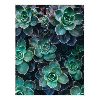Cartão Postal Plantas azuis verdes do Succulent