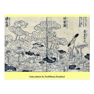 Cartão Postal Plantas de Lotus por Tachibana, Yasukuni