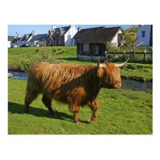 Cartão Postal Plockton, Scotland. Fazer peludo de Coooo (vacas)