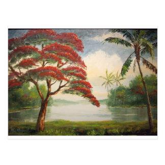 Cartão Postal Poinciana real (árvore chamativo)