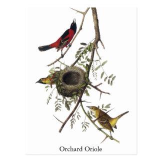 Cartão Postal Pomar Oriole - John James Audubon