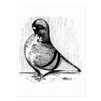 Cartão Postal Pombo africano 1978 da coruja