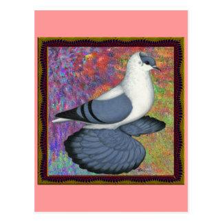 Cartão Postal Pombo azul da andorinha quadro