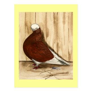 Cartão Postal Pombo calvo de Shortfaced do inglês