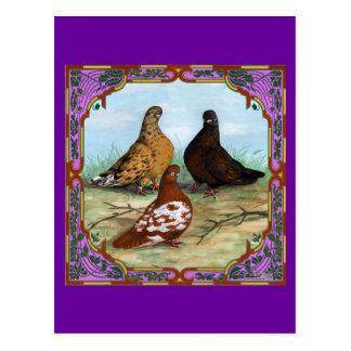 Cartão Postal Pombos de Shortfaced do inglês quadro