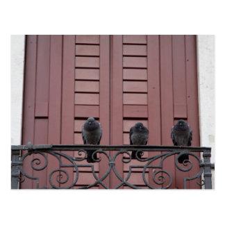 Cartão Postal Pombos em um balcão