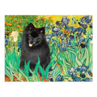 Cartão Postal Pomeranian (preto) - íris