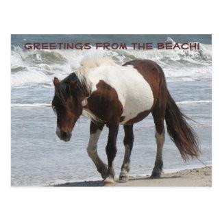 Cartão Postal Pônei da ilha de Assteague