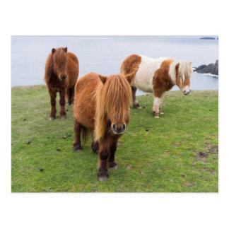 Cartão Postal Pônei de Shetland no pasto perto dos penhascos