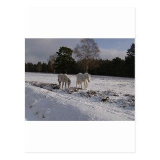 Cartão Postal Pôneis na neve