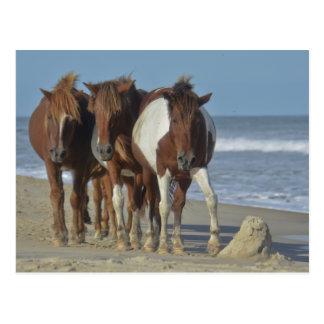 Cartão Postal Pôneis selvagens de Chincoteague, praia da ilha de