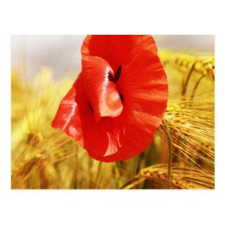 Cartão Postal Poppies em the cornfield