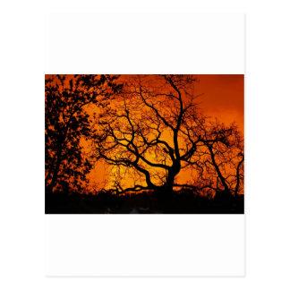 Cartão Postal Por do sol alaranjado