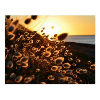 Cartão Postal por do sol através da grama