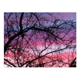 Cartão Postal Por do sol cor-de-rosa e roxo