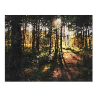 Cartão Postal Por do sol da floresta de Sherwood