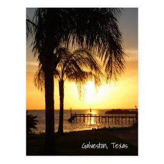 Cartão Postal Por do sol da palmeira