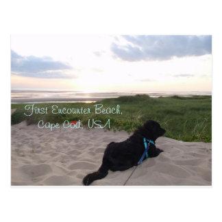 Cartão Postal Por do sol de Cape Cod com laboratório preto