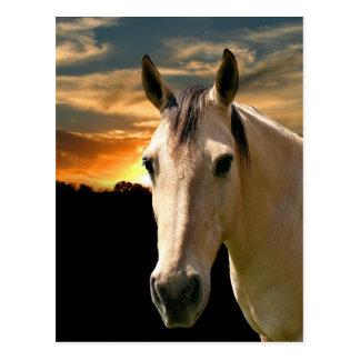 Cartão Postal Por do sol do cavalo do Buckskin