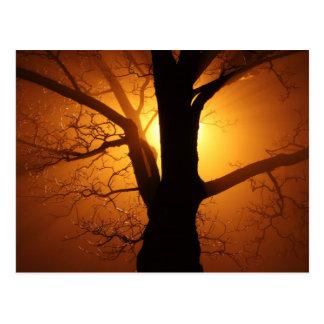 Cartão Postal Por do sol na névoa