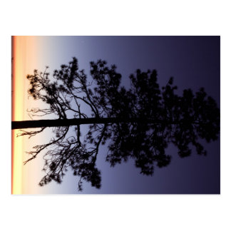 Cartão Postal Por do sol no parque nacional de sequóia