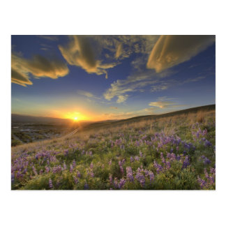 Cartão Postal Por do sol sobre as montanhas do Bitterroot e