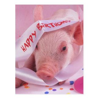 Cartão Postal Porco do feliz aniversario