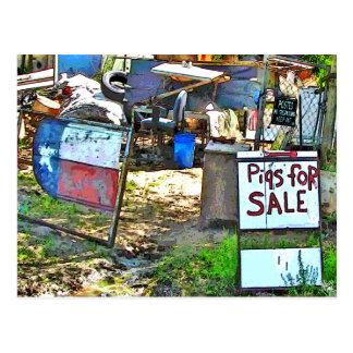 Cartão Postal Porcos para a venda em Dale, TX