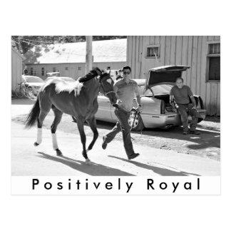 Cartão Postal Positivamente real no abrigo do cavalo