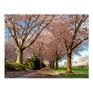 Cartão Postal Postcard Salem Cherry Blossoms & Squirrel Oregon
