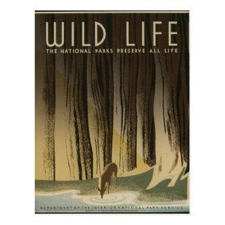 Cartão Postal Poster das viagens vintage - animais selvagens