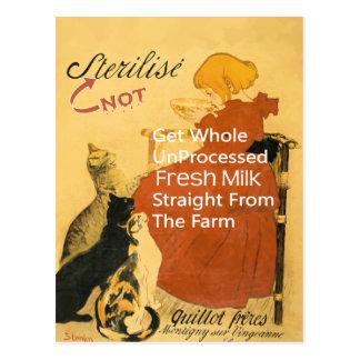 Cartão Postal Poster do leite do vintage do gatinho