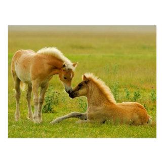 Cartão Postal Potros do cavalo