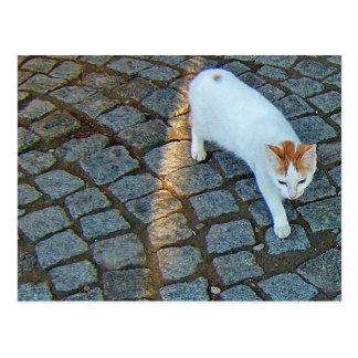Cartão Postal Pouco gato de Ephesus do ponto