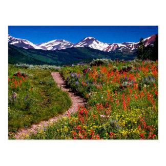 Cartão Postal Prado do Wildflower de Colorado