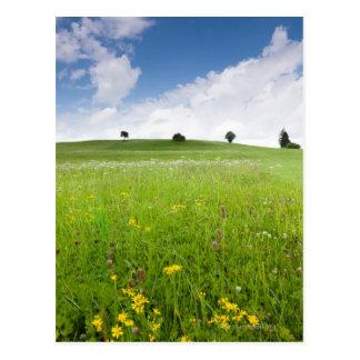 Cartão Postal prados verdes do verão no bavaria, ostallgäu com