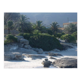 Cartão Postal Praia dos pedregulhos - Cape Town