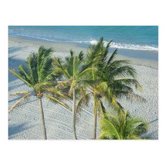 Cartão Postal Praia e palmeiras em Hollywood, FL