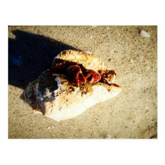Cartão Postal Praia Florida de Clearwater do caranguejo de