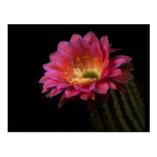 Cartão Postal prazer de florescência