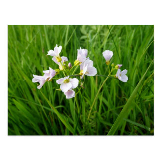 Cartão Postal Prazer do Wildflower